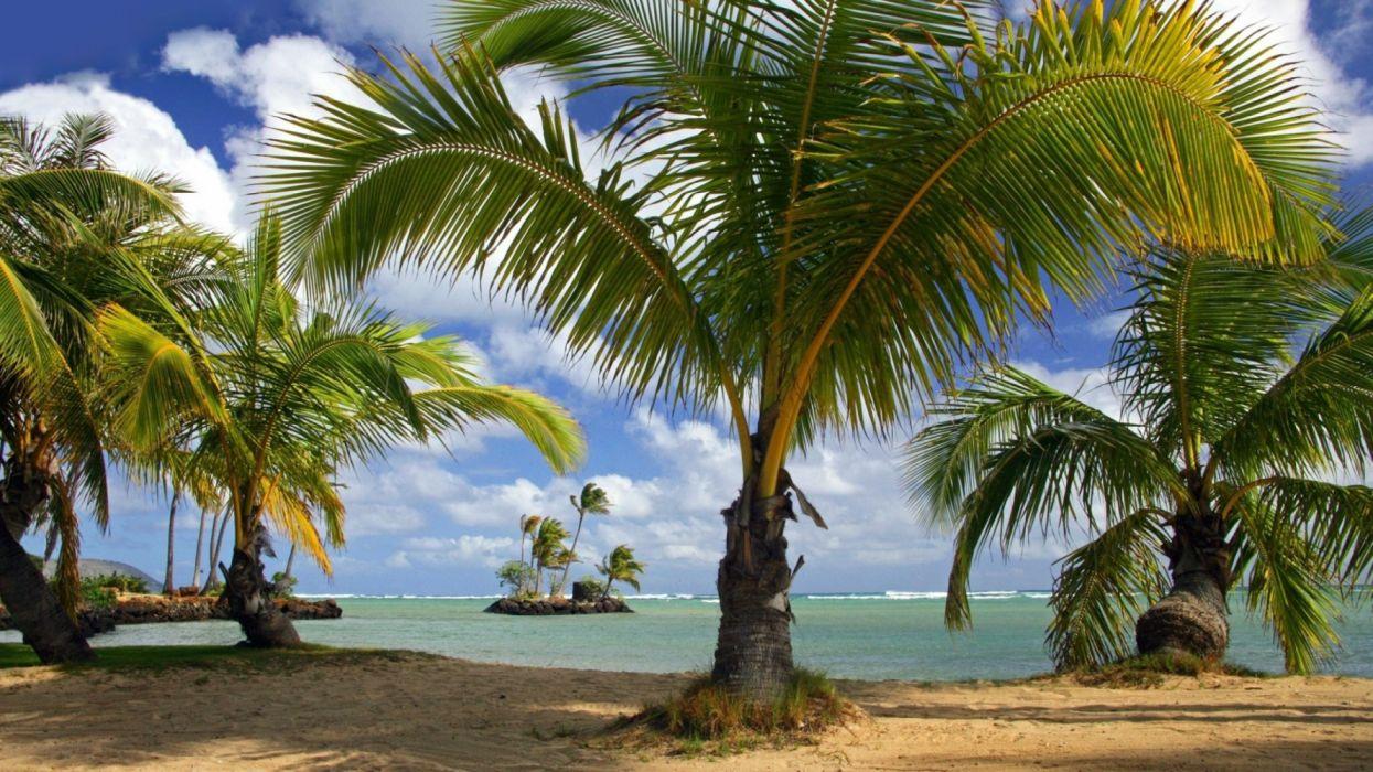 Palm trees beach coast island summer wallpaper