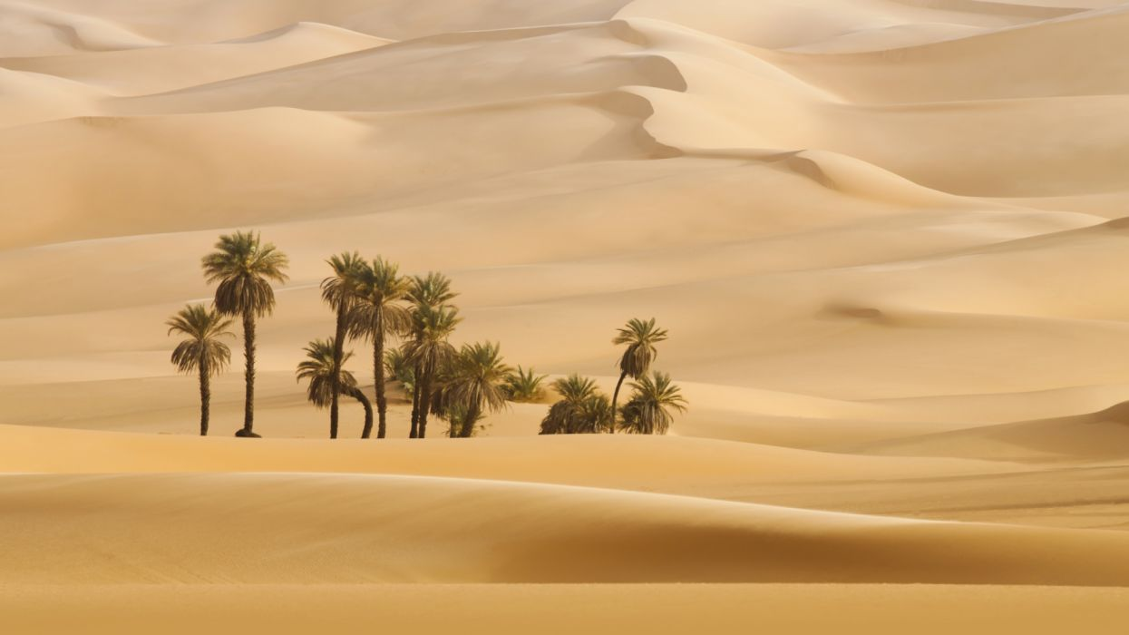 trees in desert dune palm nature wallpaper