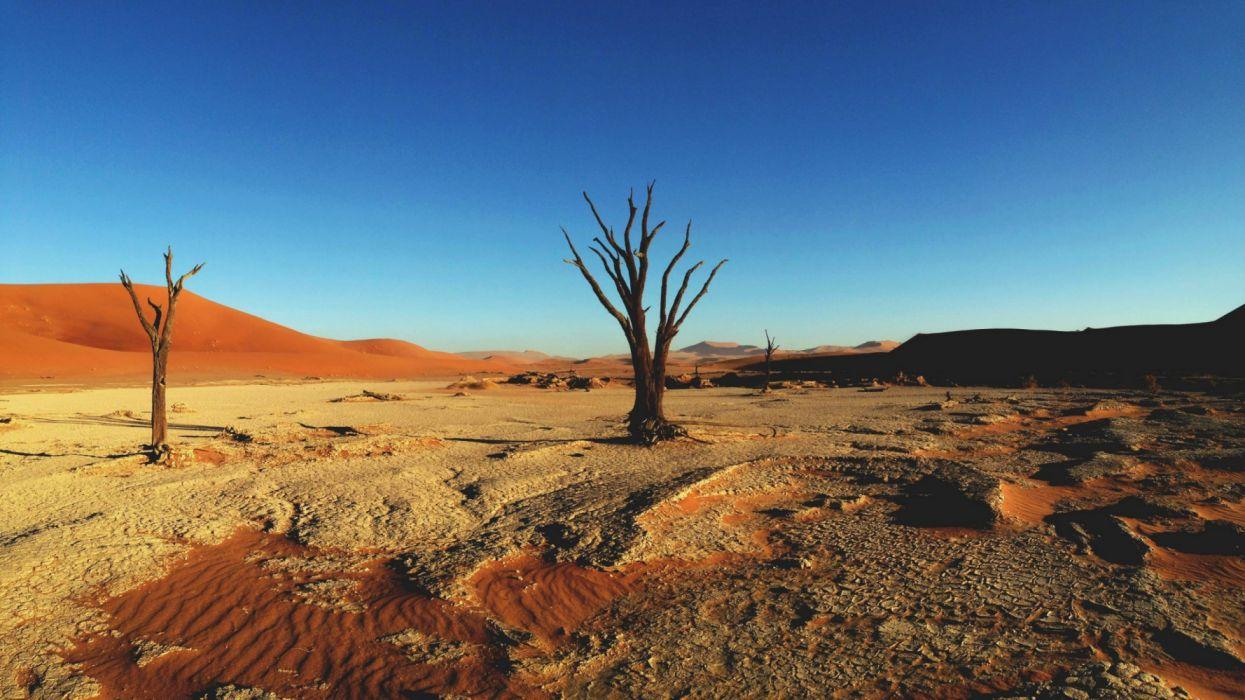 desert trees nature wallpaper