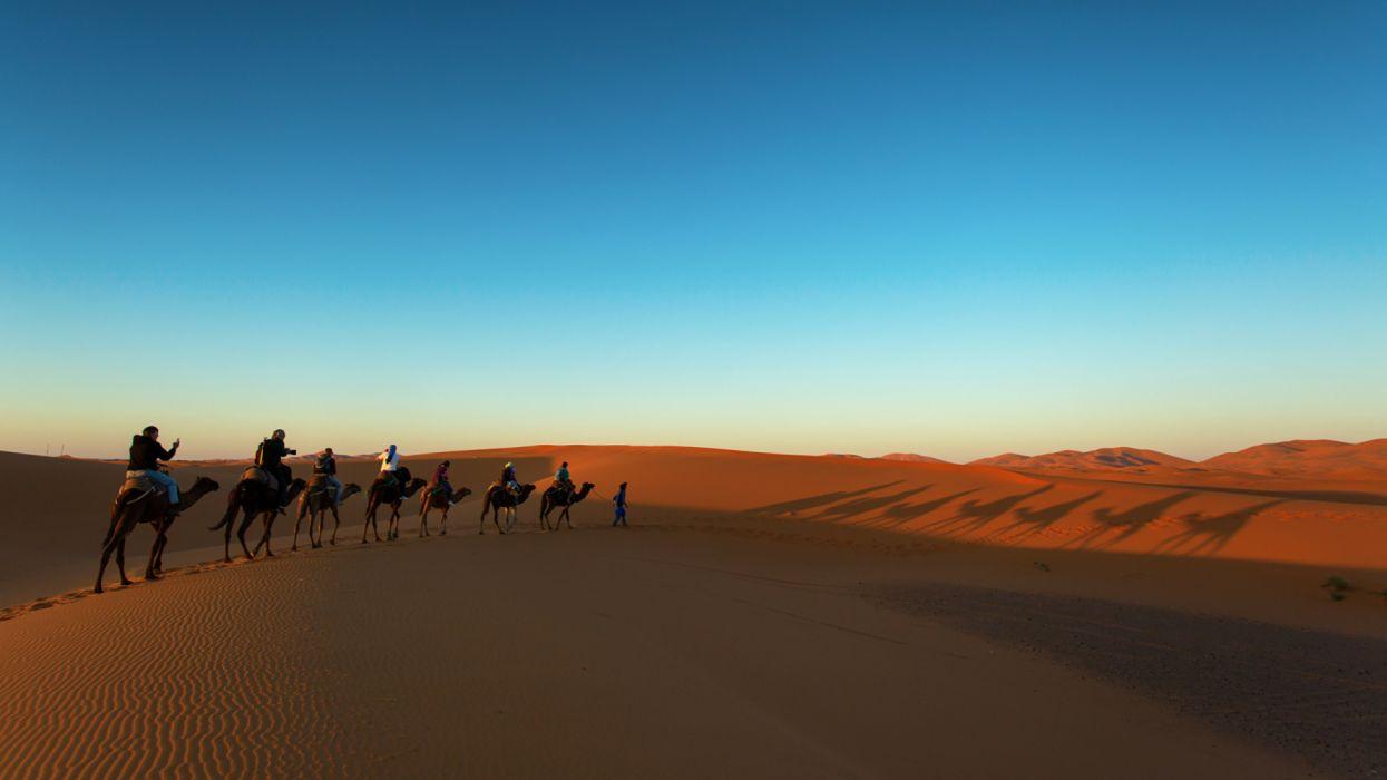 Desert Sunrises Camels Sand nature wallpaper