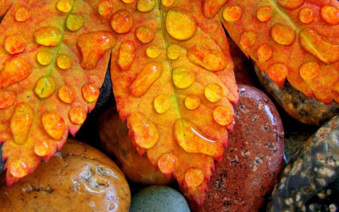 leaves macro nature Stones Water Drops wallpaper
