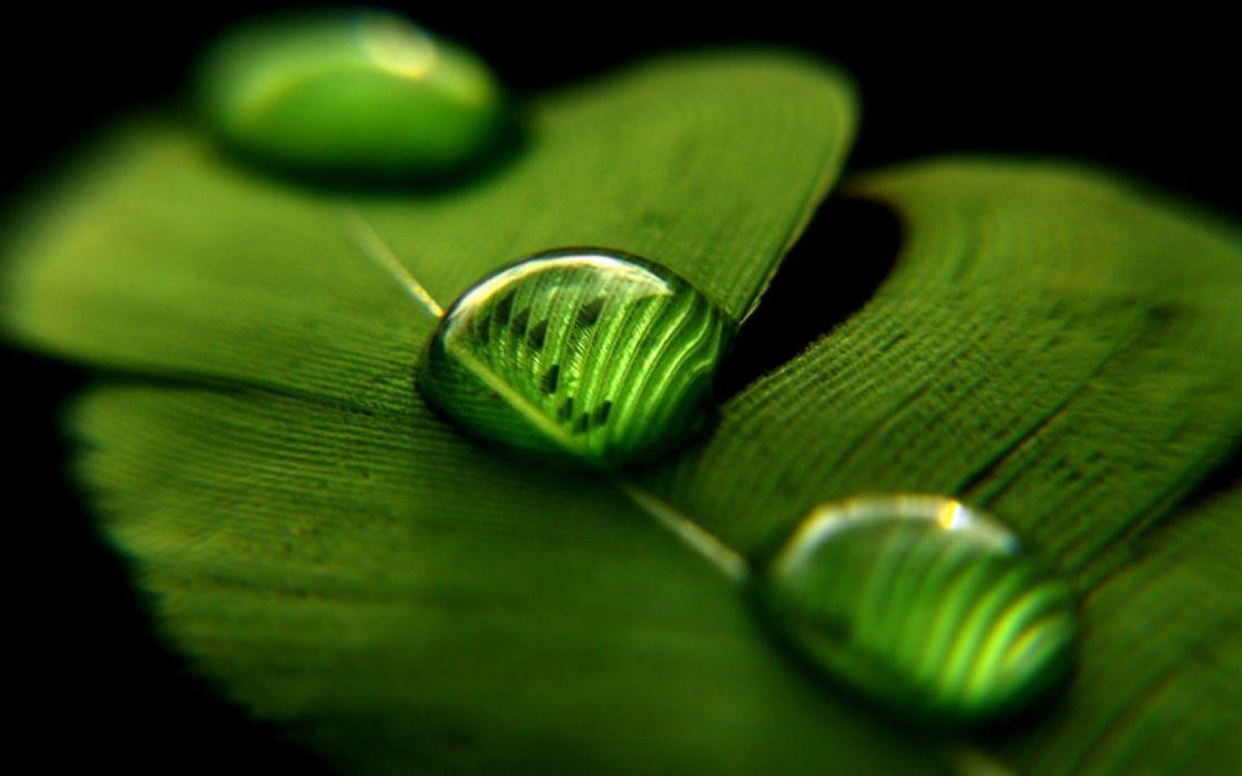 Water Drops green nature leave wallpaper