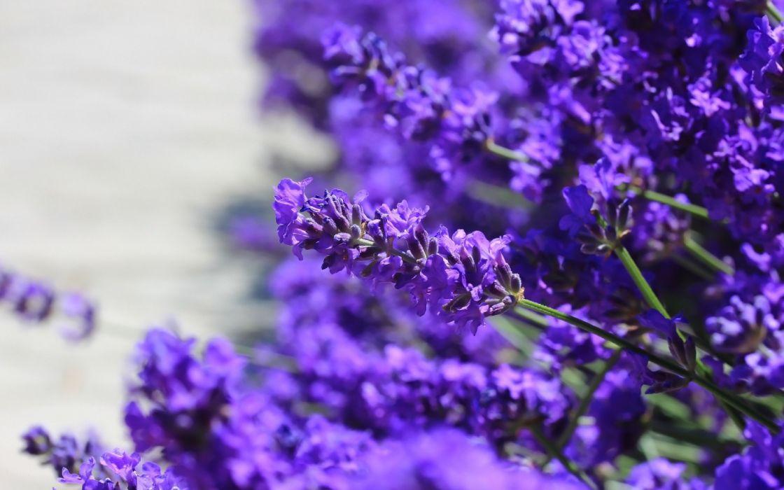 floral purple flowers wildflowers wallpaper