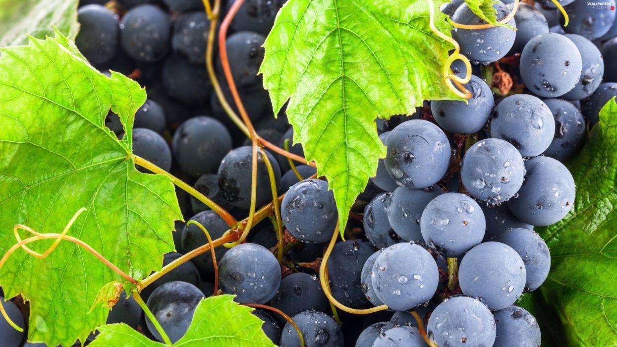 drops mature-leaf grapes fruit wallpaper