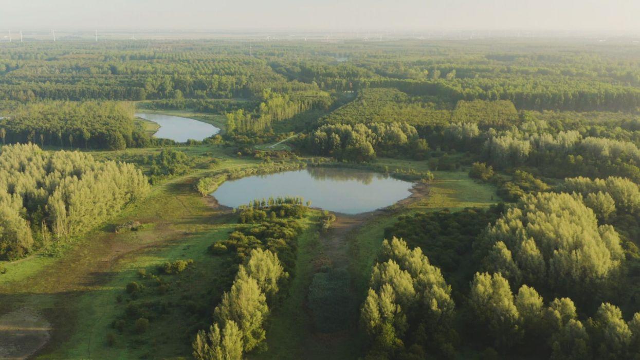 lagos paisaje naturaleza arboles wallpaper